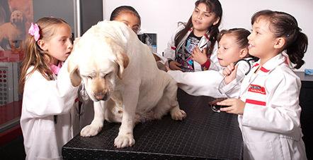 Fotografía: Niños jugando a ser veterinarios